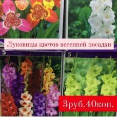 Луковицы цветов весенней посадки
